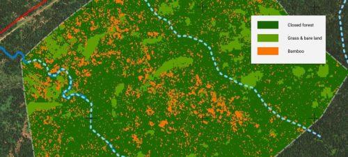 Phân tích độ che phủ rừng