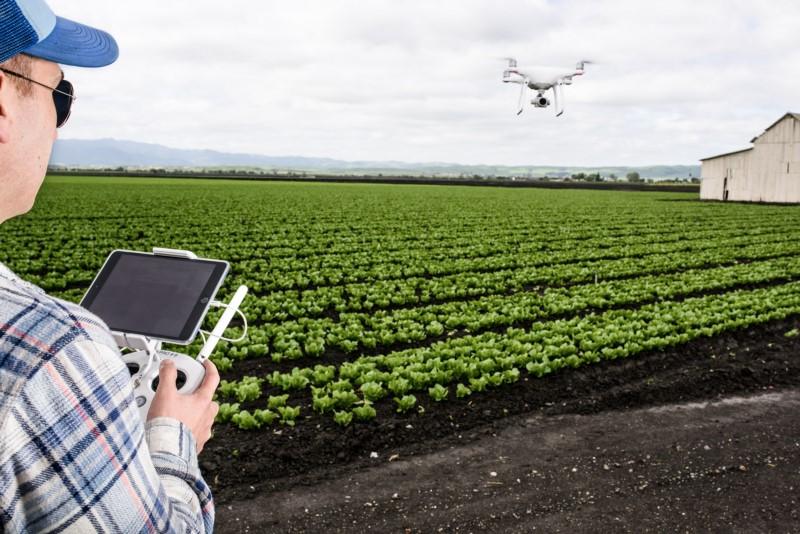 Xác định sức khỏe cây trồng bằng máy bay không người lái - Drone