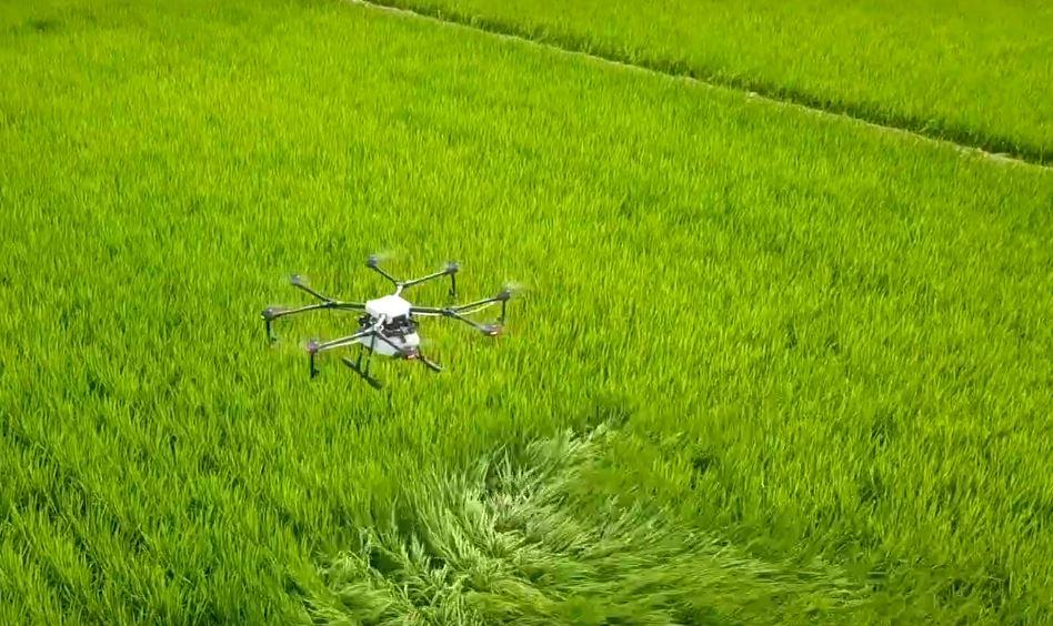 Máy bay nông nghiệp DJI Agras MG-1P trên cánh đồng