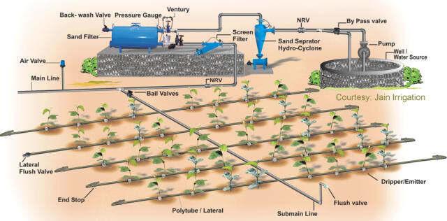 Hệ thống tưới nước nhỏ giọt tự động